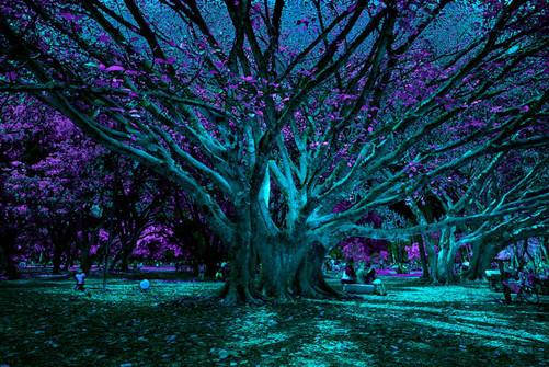 Parque do Ibirapuera V