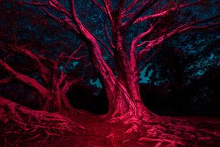 Parque do Ibirapuera i