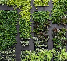 Green Wall known as Vertical Garden
