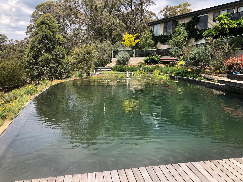 peter's pool.png