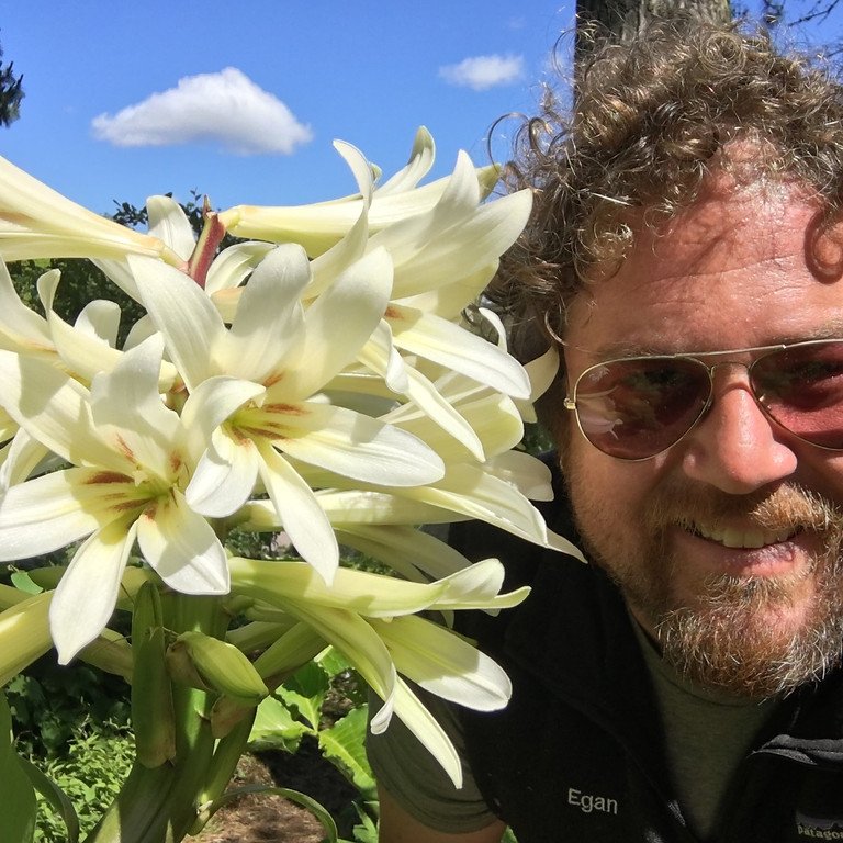 Let Us Meet our Neighbourhood TREES. A conversation on City Trees with Egan Davis