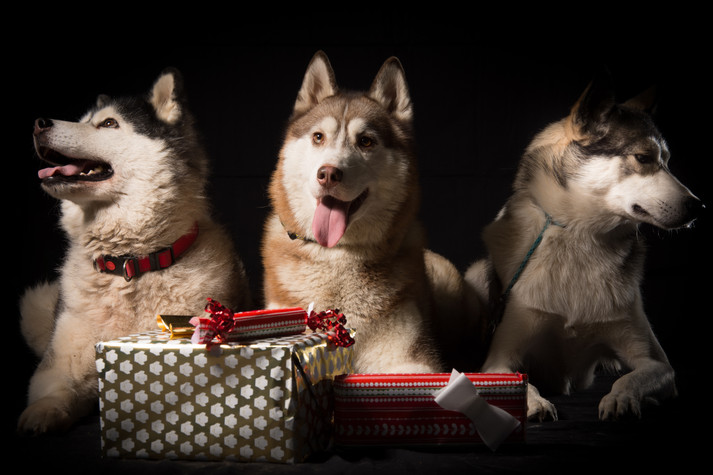 Christmas Pet Shoots