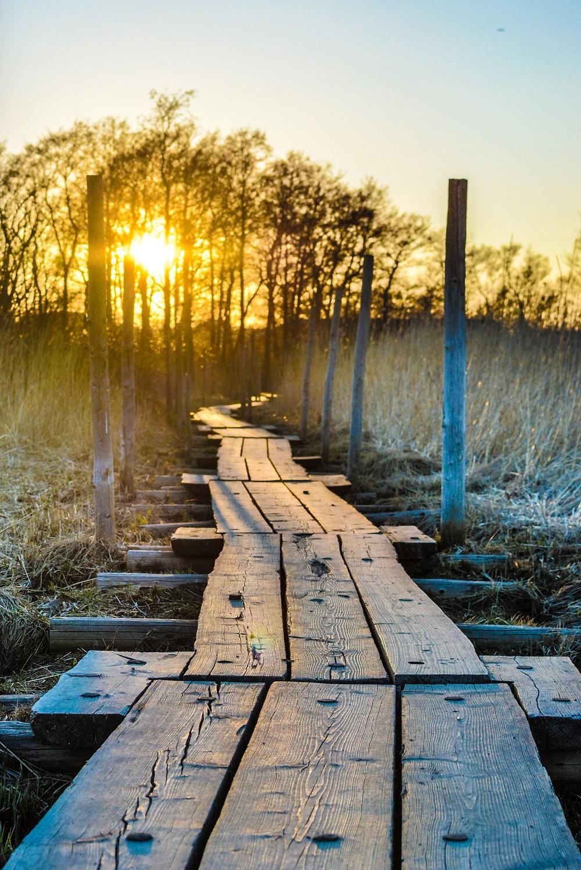 Thomas William Poole Arctic Sunrise Photography Helsinki-19.jpg