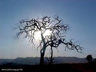 Habacuque (3.1-19) - Ainda que a figueira não floresça