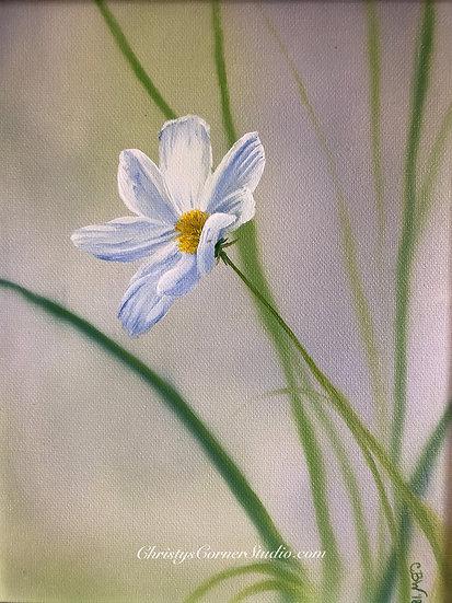 Spring Cosmos