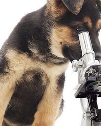 GSDmicroskop_b.jpg
