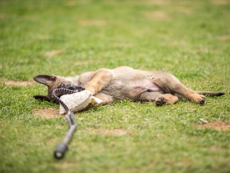Registration for Puppy Test Assessment