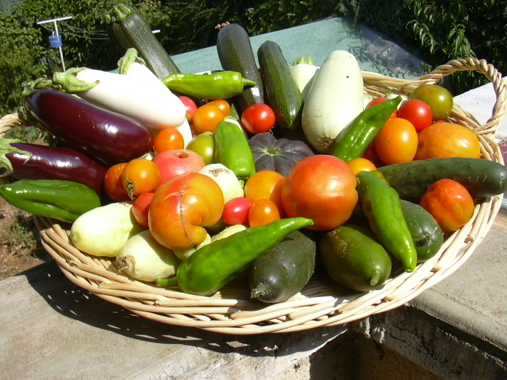 Innover dans les agrosystèmes bio et favoriser l'accès aux produits bio et locaux sur le territoire