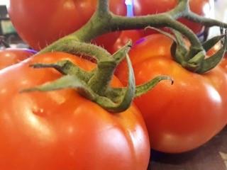 Tomaten4.jpg