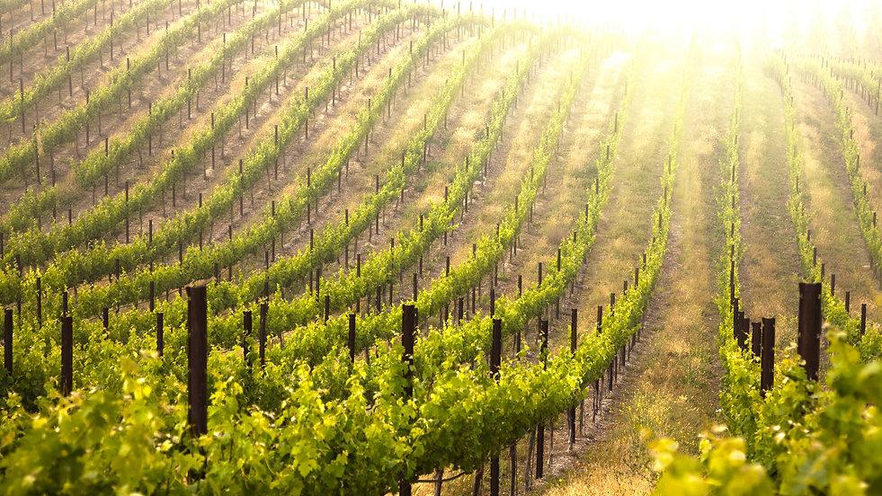 Vineyard-Garden-Wallpaper-Desktop.jpg