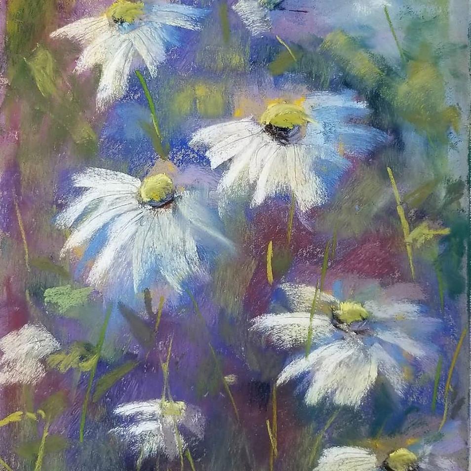 Daisies - Pastels