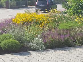 So schön kann Straßenbepflanzung sein