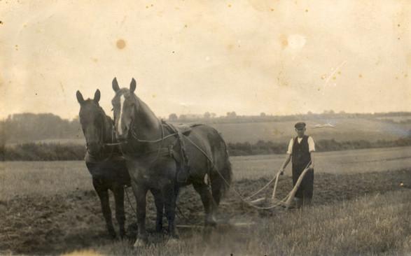 Pferdegespann.jpg