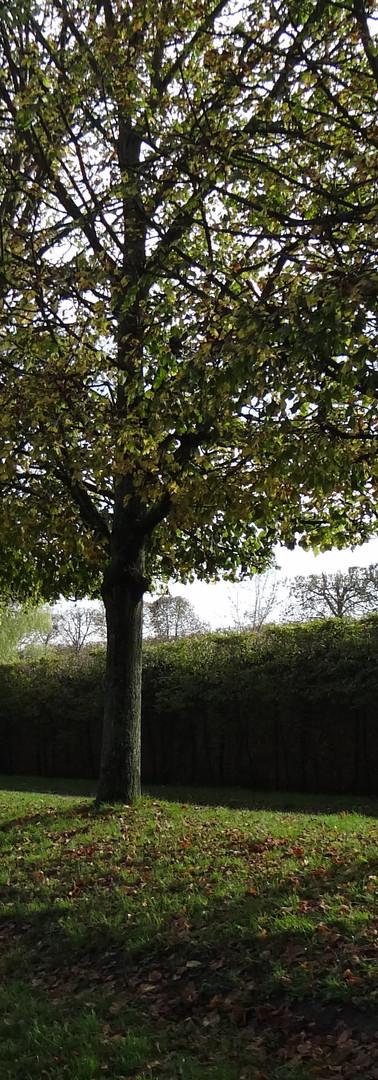 jardins paris