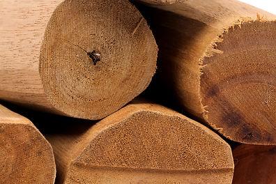 sandalo troncos