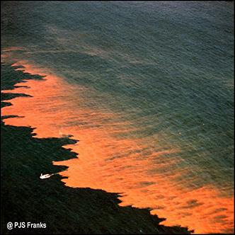 algae, red tide, harmful algal blooms, HAB