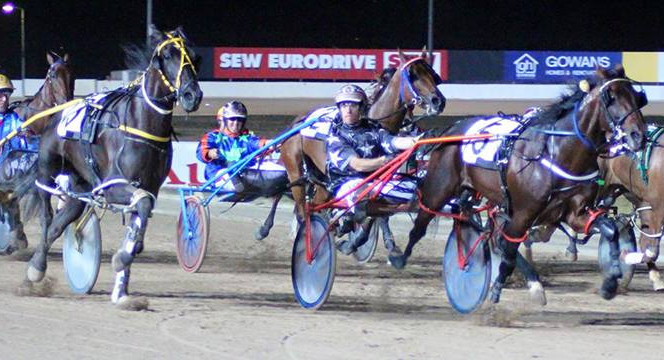 Flaming Flutter Wins SA Pacing Cup