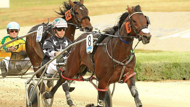 Flaming Flutter targets SA Pacing Cup