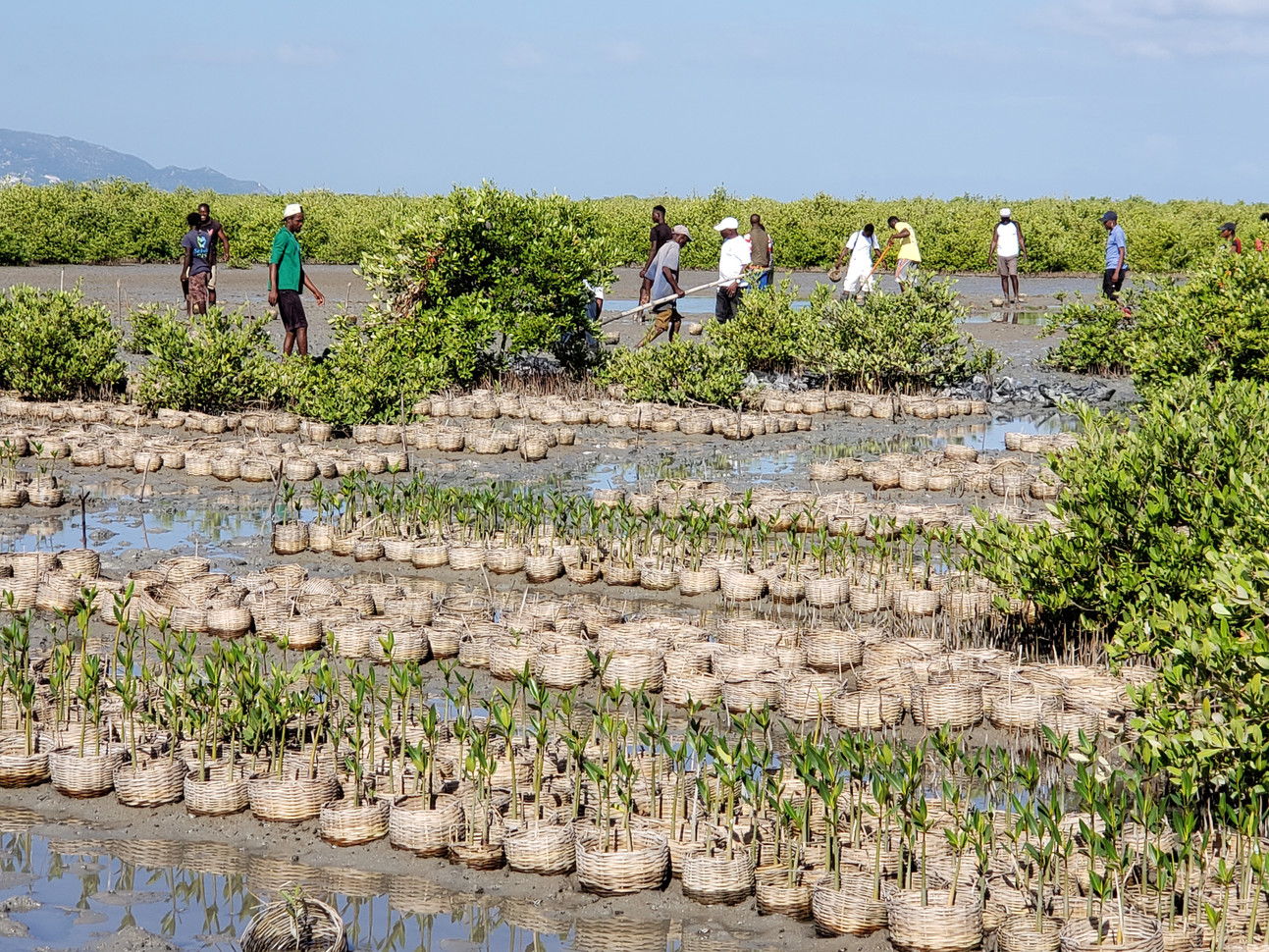 5 mangrove nurseries established in 4 communities with over 100,000 plants.
