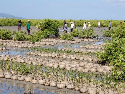 5 mangrove nurseries established in 4 communities with over 100,000 plants.