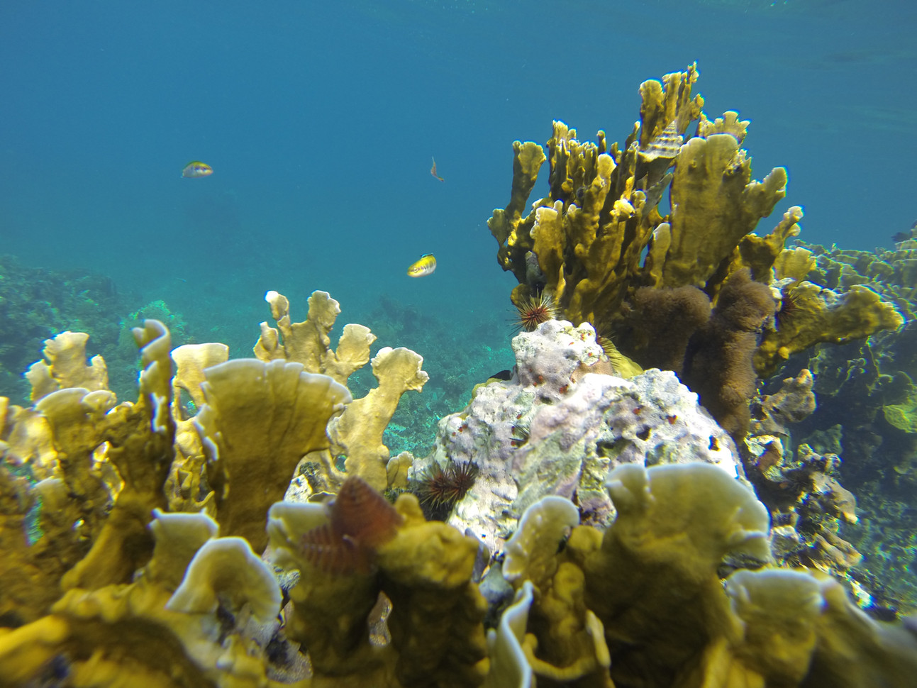 Research on coastal and marine ecosystem services.