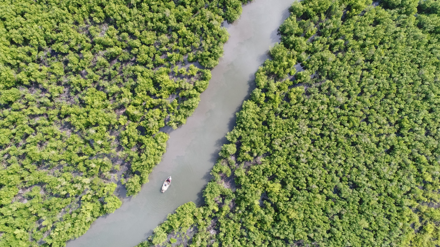 Research on Haiti's mangrove forest cover.