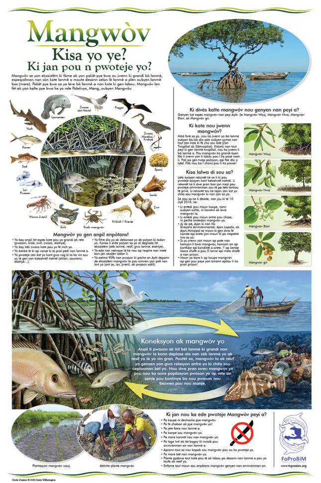 Educational materials developed on mangroves, coral reefs, marine pollution, endangered species, MPAs, and sea turtles.