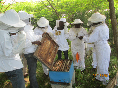 Development of apiculture for 300 adults in 9 communities.