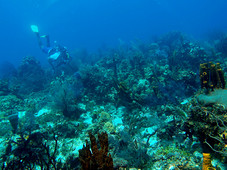 Arcadins Islands Dive