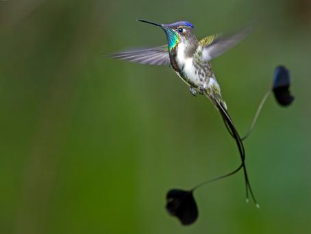 Q'inti gardens - humming bird gardens
