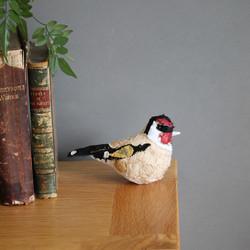 Goldfinch-IMG_5824