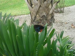 The Cycad and the Hairstreak; a Rare Sighting
