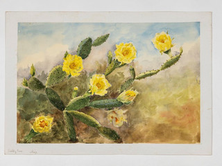 DISCOVER A Lost Painting Collection of Florida Wildflowers