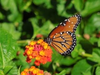 Invite Pollinators
