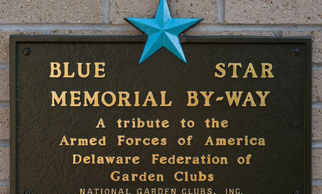 Blue Star at Lily Park