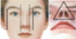 鼻翼-02.png