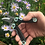 Thumbnail: Folding Secateurs in a Tin