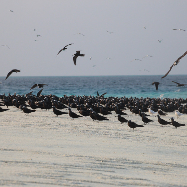 the Maldives