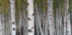 Birch Tate Modern 7-10-2009 13-27-44.jpg