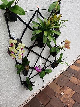 orchid wall 1.jpg