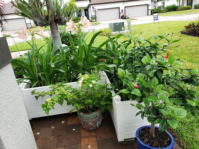 amaryllis planter.jpg
