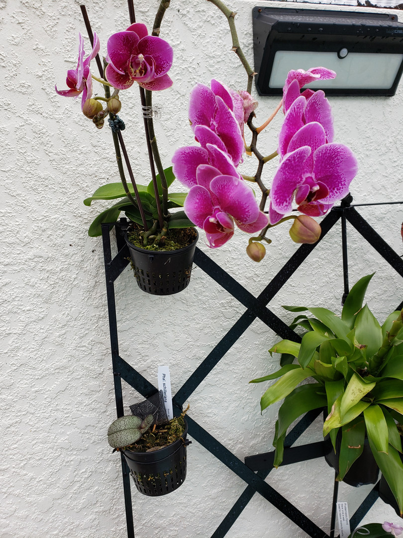 orchid wall 2.jpg