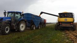 Metzger Farms Dashwood Ontario
