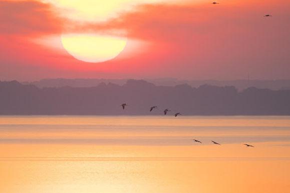 Kraanvogels.jpg