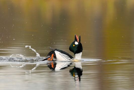 Het Vogeljaar 2012