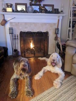 Gina & Rufio winter 2018
