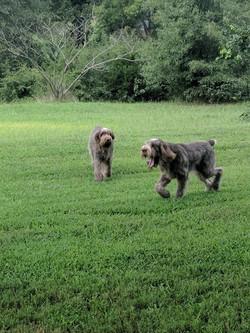 Breda & Gina in the yard