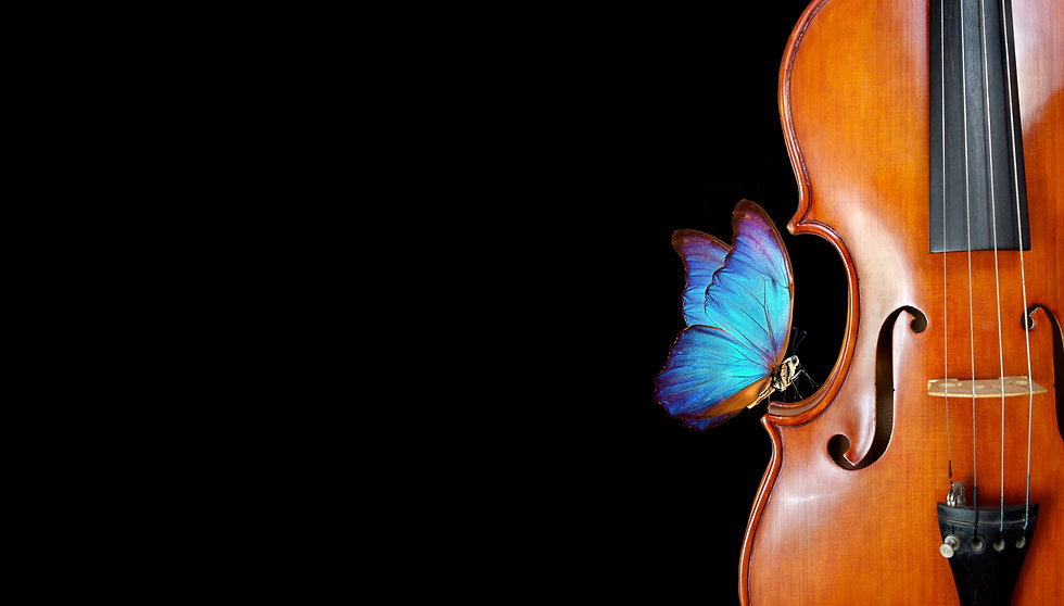 violin isolated on black closeup. beautiful blue butterfly morpho on violin. music concept