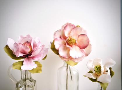 Sugar southern magnolia, saucer magnolia & oyama magnolia in shades of pink & white