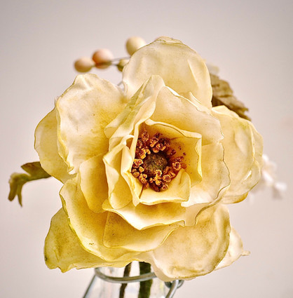 Wild sugar rose in pale yellow